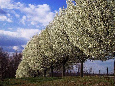 Growing Debate Over Sacramento Tree Removals Sacramento