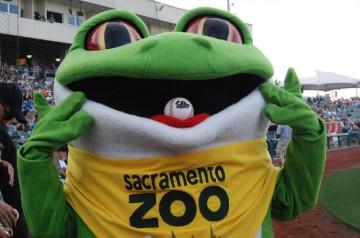 Sacramento Zoo's Mascot Gus the Green Tree Frog