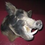 Profile photo of cornelius